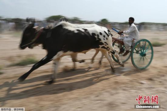 养牛气味太大遭邻居起诉 法国一农民被罚8000欧元
