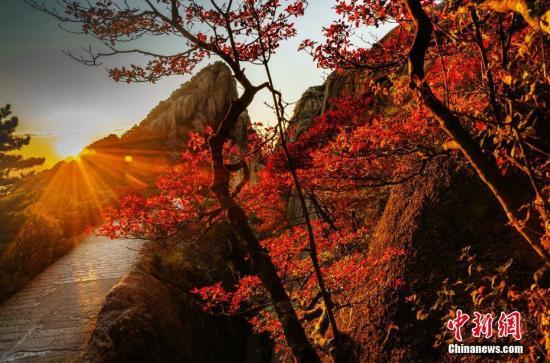 图为黄山春景。 圆坐华 摄