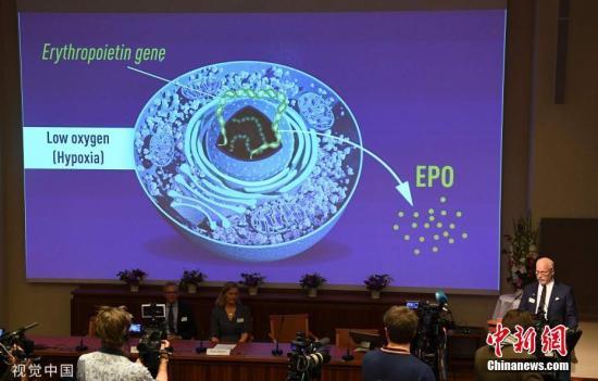 獲獎理由為發現了細胞如何感知以及對氧氣供應的適應性。據悉,三位獲獎者長期專注于該課題的研究。 圖片來源:視覺中國