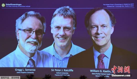 北京时间10月7日下午,诺贝尔生理学或医学奖获奖人名单率先被揭晓:威廉・凯林(William G. Kaelin Jr),彼得・拉特克利夫(Sir Peter J. Ratcliffe)以及格雷格・塞门扎(Gregg L. Semenza)获得这一奖项。