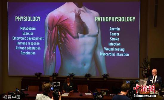 2019年10月7日,诺贝尔生理学或医学奖揭晓。 图片来源:视觉中国