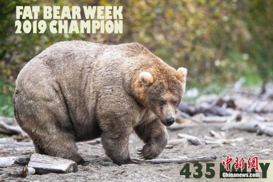 """谁是最肥的崽?美国""""胖熊争霸赛""""冠军揭晓(图)"""