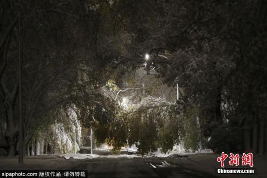 当地时间10月11日,加拿大马尼托巴省温尼伯市迎来一场初冬暴风雪。暴风雪天气带来大量的湿雪,导致温尼伯市的树木、汽车和电线倒塌。图片来源:Sipaphoto 版权作品 请勿转载