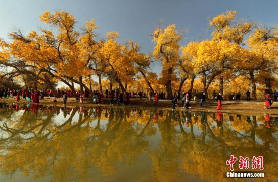 资料图:额济纳胡杨林旅游区。中新社发 王健民 摄 图片来源:CNSPHOTO