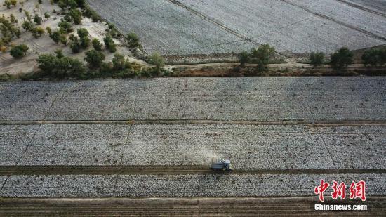 资料图:新疆生产建设兵团第二师31团9连农户采收新棉,田野里呈现出一片丰收景象。确·胡热 摄
