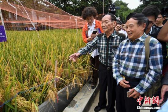 资料图:袁隆平带领嘉宾在国家杂交水稻工程技术研究中心的试验田观摩。杨华峰 摄