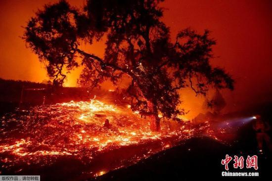 当地时间10月24日,美国加州燃起熊熊大火,树木灰烬四处翻飞。由于天气干燥多风,太平洋天然气和电气公司已经断电以避免引发火灾,北加州的部分地区目前仍未恢复电力。