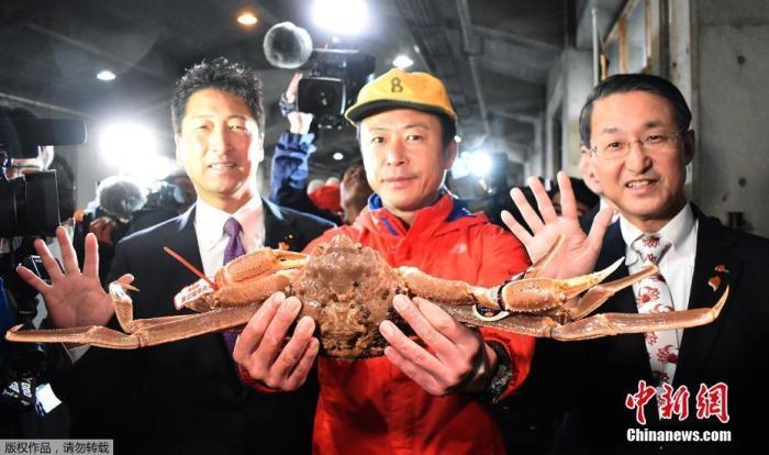 资料图:日本鸟取县的一只灰眼雪蟹以500万日元(约合32万人民币)的高价拍出。