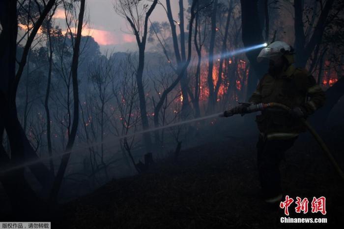 资料图:澳大利亚东部丛林大火肆虐,灾情加剧。