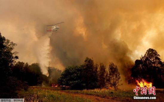 近日,澳大利亚东部丛林大火肆虐,灾情加剧,截至11月9日午夜,火灾已造成至少3人死亡,30多人受伤,150所房屋烧毁,数以千计居民被迫逃离家园。此外,当地保护区的约350只考拉也在大火中丧生。