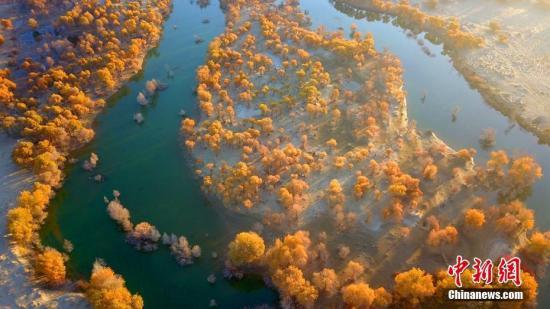 资料图:新疆塔里木河尾闾台特玛湖段胡杨林。确・胡热 摄