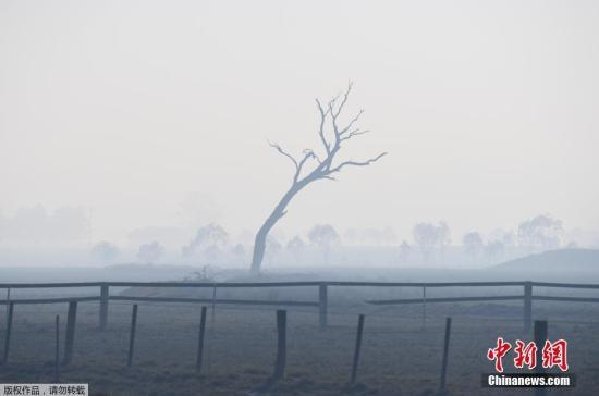 资料图:澳大利亚格伦因内斯附近一棵被烟雾笼罩的枯树。