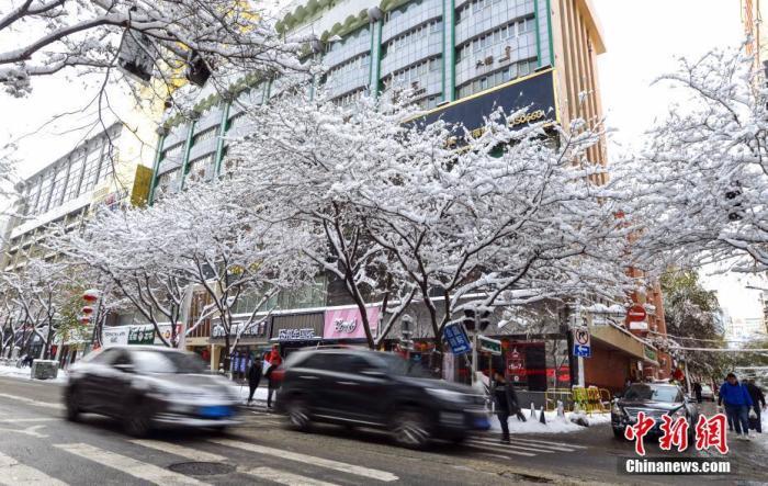 """资料图:树木上落满积雪,呈现""""玉树琼花""""般景象。中新社记者 刘新 摄"""