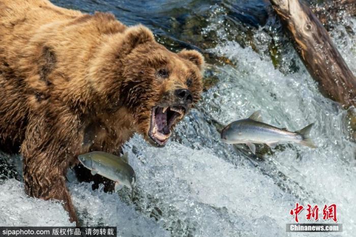 地铁在线观看BD日本核污水入海对俄有何威胁?事关他们餐桌上的鲑鱼!