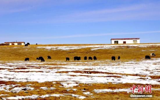 资料图:三江源地区青海省玉树藏族自治州,白雪覆盖青色山峦和金色的草场。 郭福山 罗云鹏