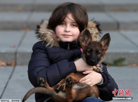 当地时间11月20日,荷兰埃因霍温,比利时9岁神童劳伦特·西蒙斯(Laurent Simons)在大学里与狗狗萨米(Samimie)合影。