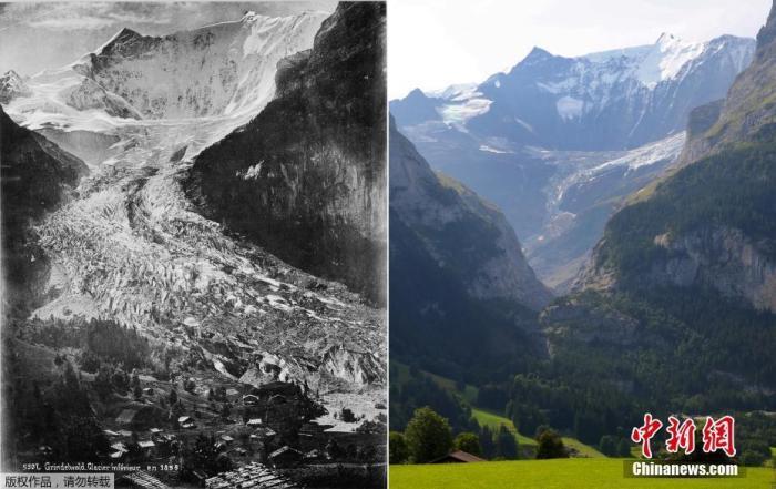 图为1865年(左)和2019年8月26日的瑞士下格林德沃冰川。 (拼接图)