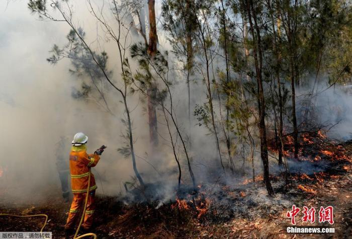 澳大利亚野火烟霾扩散笼罩堪培拉 高温或助长火势