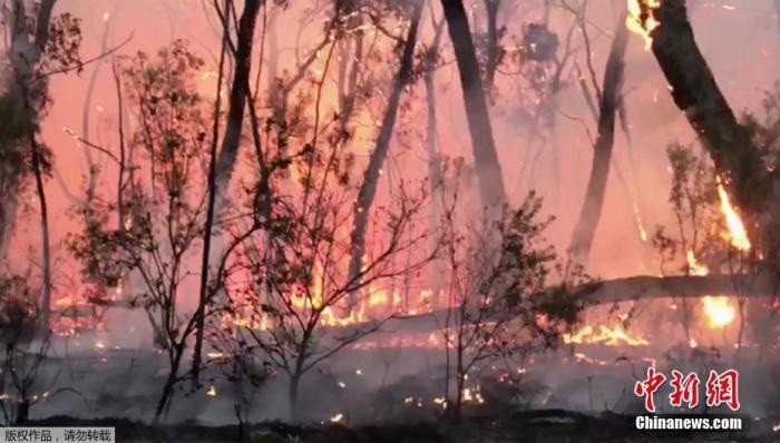 资料图:澳大利亚新南威尔士州山火。