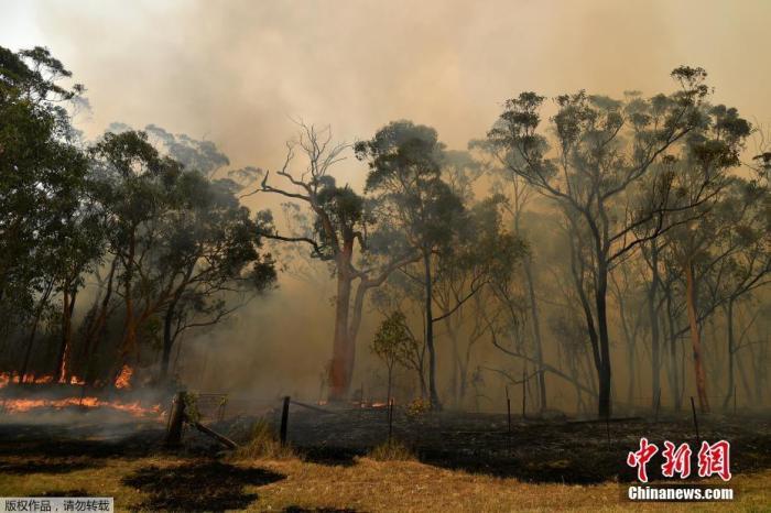 资料图:当地时间2019年12月10日,澳大利亚悉尼,新南威尔士州大火持续蔓延,悉尼上空烟雾弥漫。