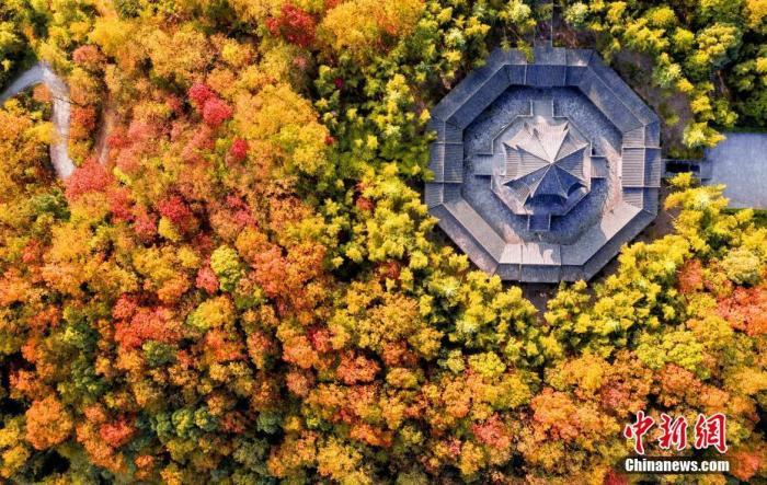 """资料图:湖北省宜都市,层林尽染。由于今年秋季以来温度偏高,降雨较少,也没有出现大风天气,""""彩林""""景观已持续一个多月之久。冯建 摄"""