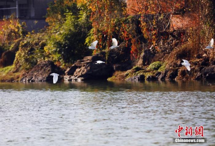 资料图:长江的一级支流黄柏河。黄余洋 摄