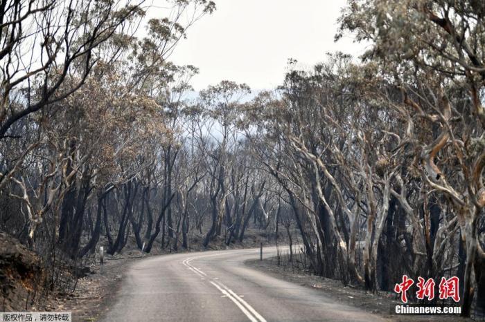 当地时间12月18日,位于澳大利亚悉尼西北约120公里的蓝山山脉威森山发生森林大火,树木被烧成焦炭。据悉,澳大利亚本周经历了有记录以来最热的一天。当局在18日表示,预计持续的热浪将会加剧本就严峻的森林火灾情势。