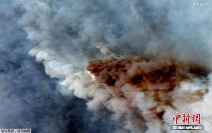 当地时间1月4日,澳大利亚Cooma,两只袋鼠在浓烟弥漫的田野上跳跃。据报道,澳大利亚多地气温预计飙破40摄氏度,加上强风风向改变,将助长和扩散火焰,恐让野火失去控制。据报道,悉尼大学生态学家估算,大约有5亿只鸟类、哺乳动物和爬行动物在澳大利亚的森林火灾中丧生。他们担心这会造成物种灭绝。目前,受灾动物数量还在继续增长。