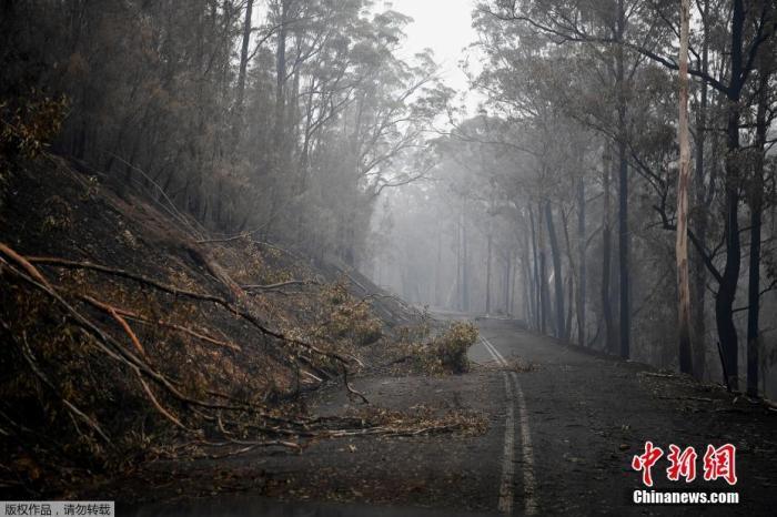 图为当地时间1月7日,倒下的树木阻塞了澳大利亚沿海小镇伊登附近火场的道路。