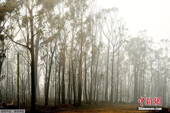 有专家表示,大规模野火已是气候变迁下的新常态,火势之强烈前所未见,对此消防员几乎无能为力。图为澳大利亚伊登小镇大火过后的树林。