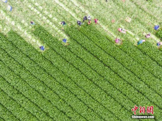 1月我国蔬菜价格上涨逾20% 农业农村部:受疫情和节日叠加影响