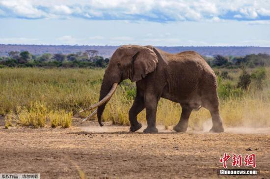 资料图:大象。