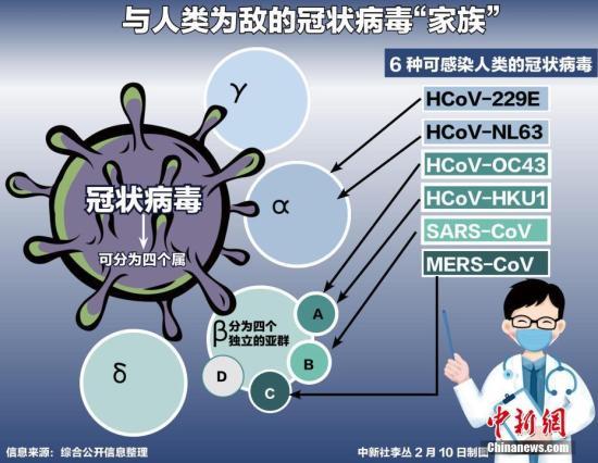 新冠肺炎疫情持续,各国专家也接连对病毒展开研究分析。迄今为止,除本次在武汉引起病毒性肺炎暴发疫情的新的冠状病毒外,共发现6种可感染人类的冠状病毒。<a target='_blank' href='http://ouphe.cn/'>中新社</a>记者 李丛 制图