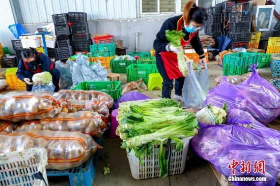 """2月18日,在武汉市东西湖区的强鑫蔬菜产销专业合作社的蔬菜分拣中心,工作人员正在对现场的多种蔬菜挑选5种,做成""""套装蔬菜"""",由专人负责运送到对接的小区。中新社记者 张畅 摄"""