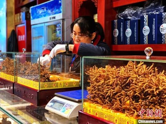 """探访青海冬虫夏草市场:塑料袋装北京助孕""""软黄金"""",新鲜虫草直达海内外"""