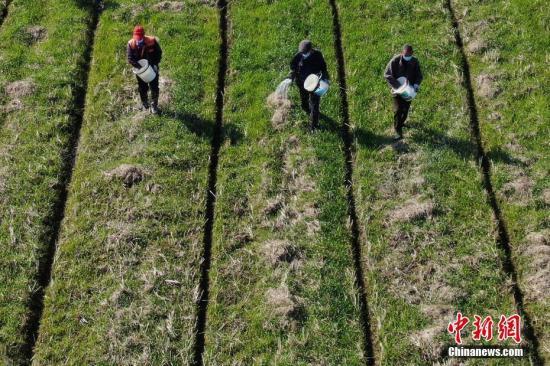 农业农村部:七类肥料产品登记改为备案 将进一步完善制度加强监管