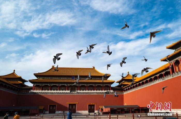 3月20日,一群鸽子在北京故宫博物院午门外广场展翅飞翔。中新社记者 侯宇 摄
