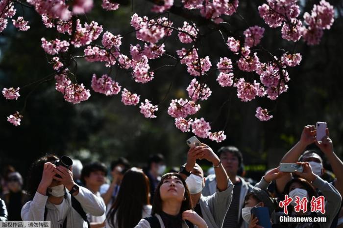 当地时间2020年3月22日,日本东京上野公园樱花绽放,吸引不少游人在樱花林间漫步、野餐。