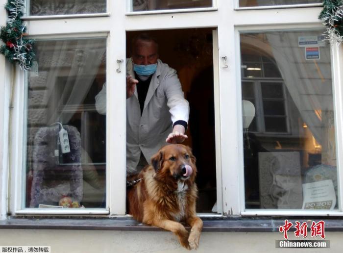 捷克布拉格,男子抚摸着坐在窗户上的狗。
