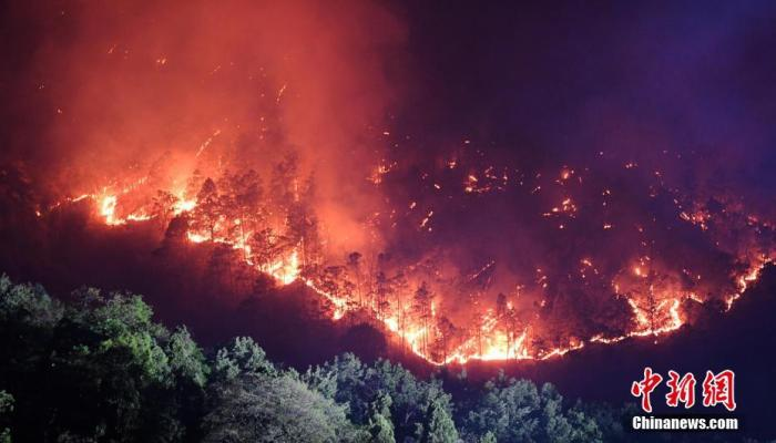 森林火灾可不可以不扑救?听专家如何说