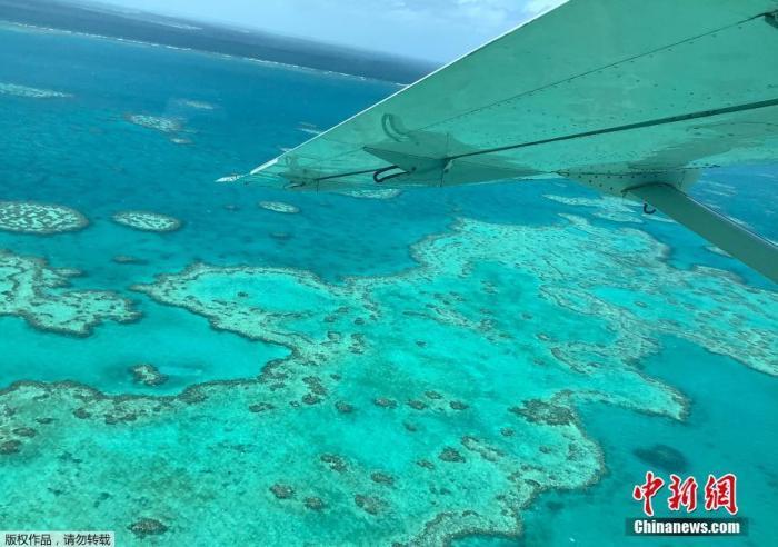 """""""人们需要看到这些(白化)事件,这些明确的信号表明大堡礁正在呼吁紧急帮助,并要求我们竭尽所能""""。1998年、2002年、2016年、2017年和2020年,大堡礁共经历了五次大规模的白化事件,都是由全球变暖导致的海洋温度上升造成的。在2016年和2017年两次大规模白化中,大堡礁的南部地区基本得以幸免,现在却经历了中度或严重白化。"""