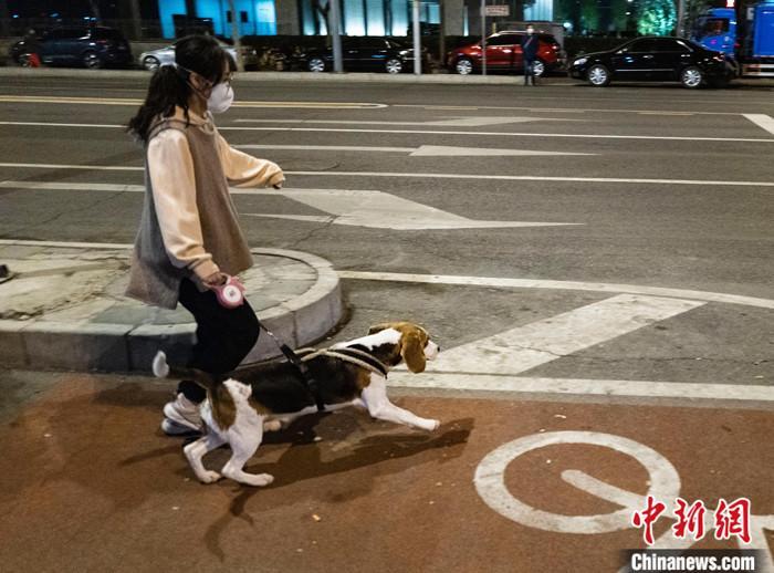 """4月9日,北京市民在街头遛狗。中国农业农村部近日制订了《国家畜禽遗传资源目录(征求意见稿)》,就畜禽目录向社会公开征求意见,在针对《目录》的说明中,农业农村部专门提到,狗已""""特化""""为伴侣动物,不宜列入畜禽管理。 中新社记者 侯宇 摄"""