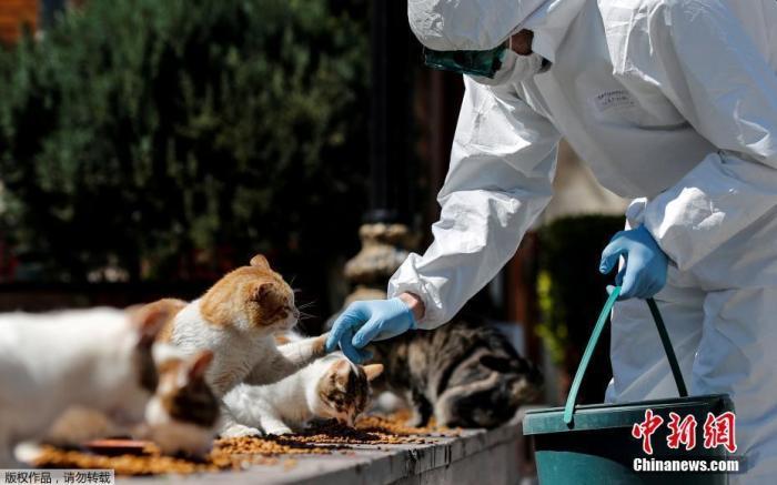 当地时间4月9日,土耳其伊斯坦布尔,别名身穿防护服的市政做事人员在Sultanahmet广场喂漂泊猫。