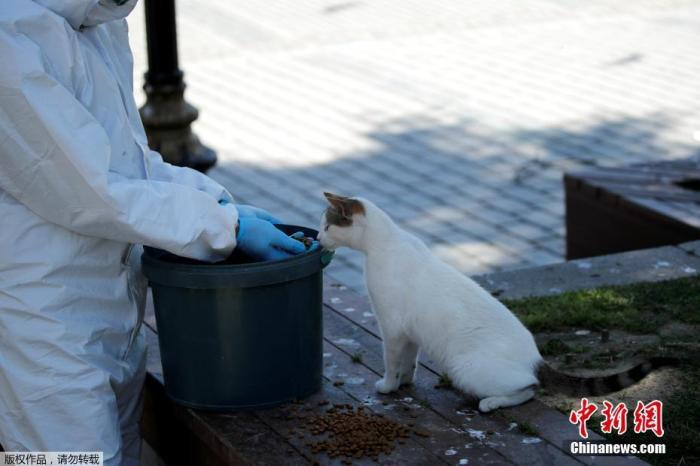 为防控新冠巨龙肺炎疫情的传播々,土耳其政府已经采取了严格的措】施来限制社会接触。生活在土耳其伊斯坦◇布尔的流浪猫因为疫情面临被饿死的危@险。