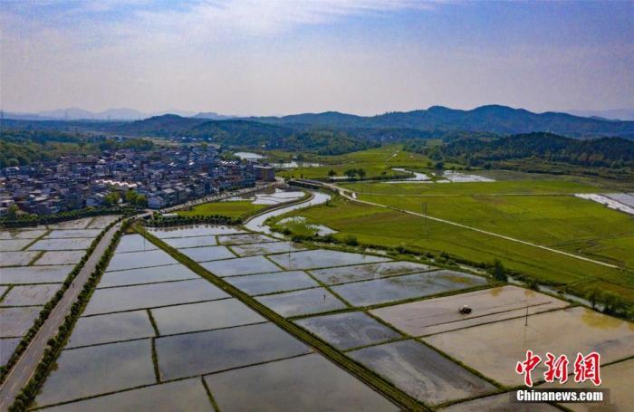 农业农村部:今年早稻预计增产 生猪恢复势头持续向好