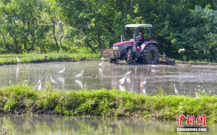 资料图:农民在农田里忙碌耕作。 赵春亮/摄