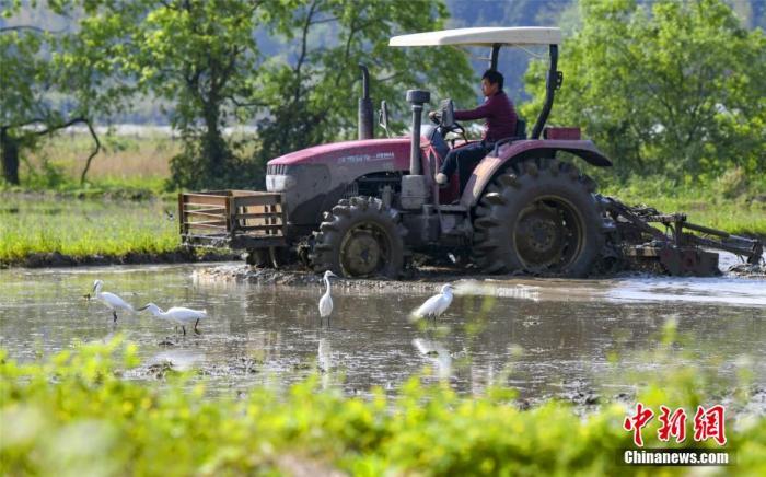 资料图:农民忙碌于春耕作业。赵春亮/摄
