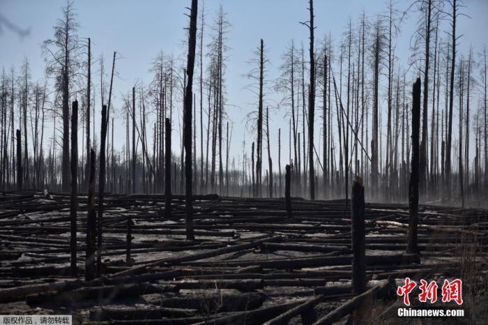 当地时间4月12日,乌克兰切尔诺贝利核电站周围30公里禁区的森林大火过后,波利斯凯定居点的树木被烧毁。