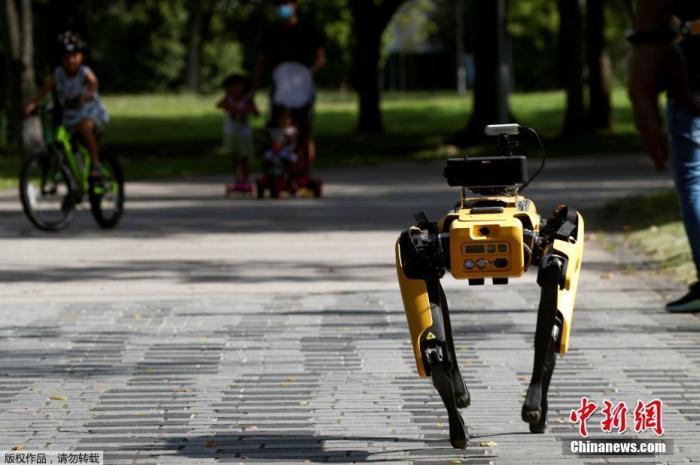 近日,新加坡一处公园出现机器狗巡逻,提醒人们保持安全的社交距离。据悉,这只机器狗正在测试中,它的头部配有摄像头,可以扫描周围环境,8号彩票帮助 估算公园人流。