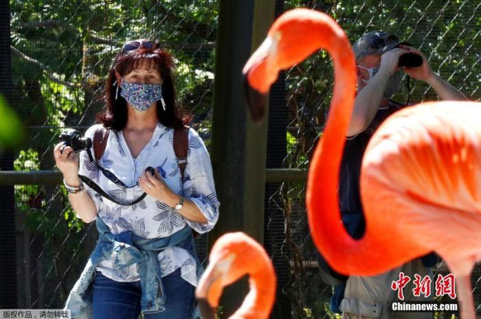 资料图:当地时间5月18日,比利时布吕杰里特动物园开放,游客戴口罩进园看火烈鸟。